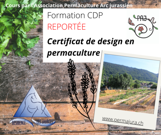 report cdp 2020